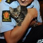 politi-og-katt-klipp_0